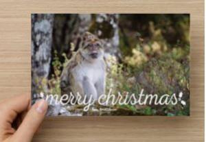 christmascard-bmac