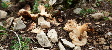 Mushrooms. Photograph by Andrew Walmsley.
