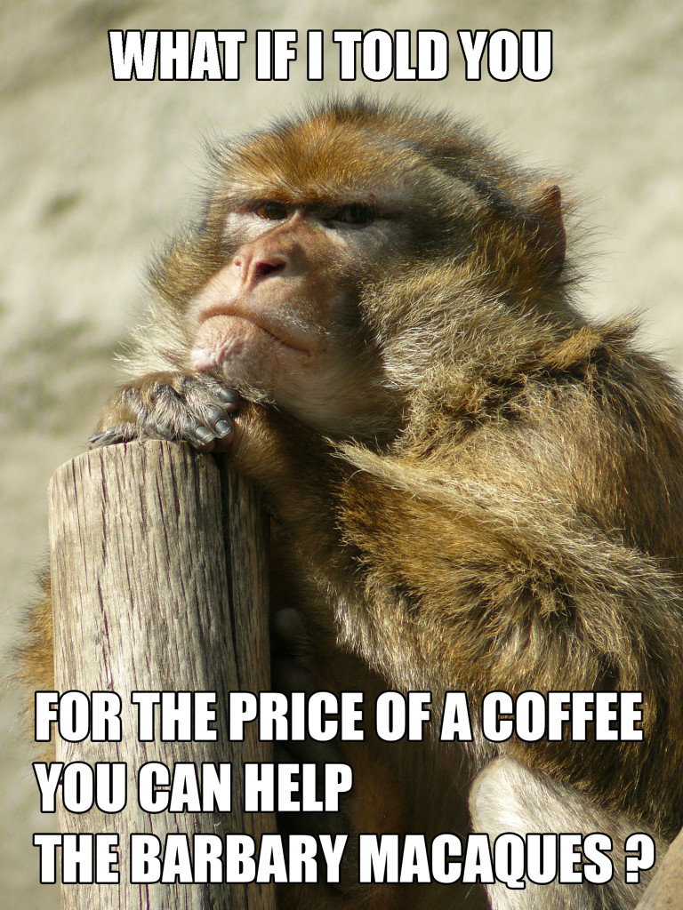 barbarymacaque-coffee