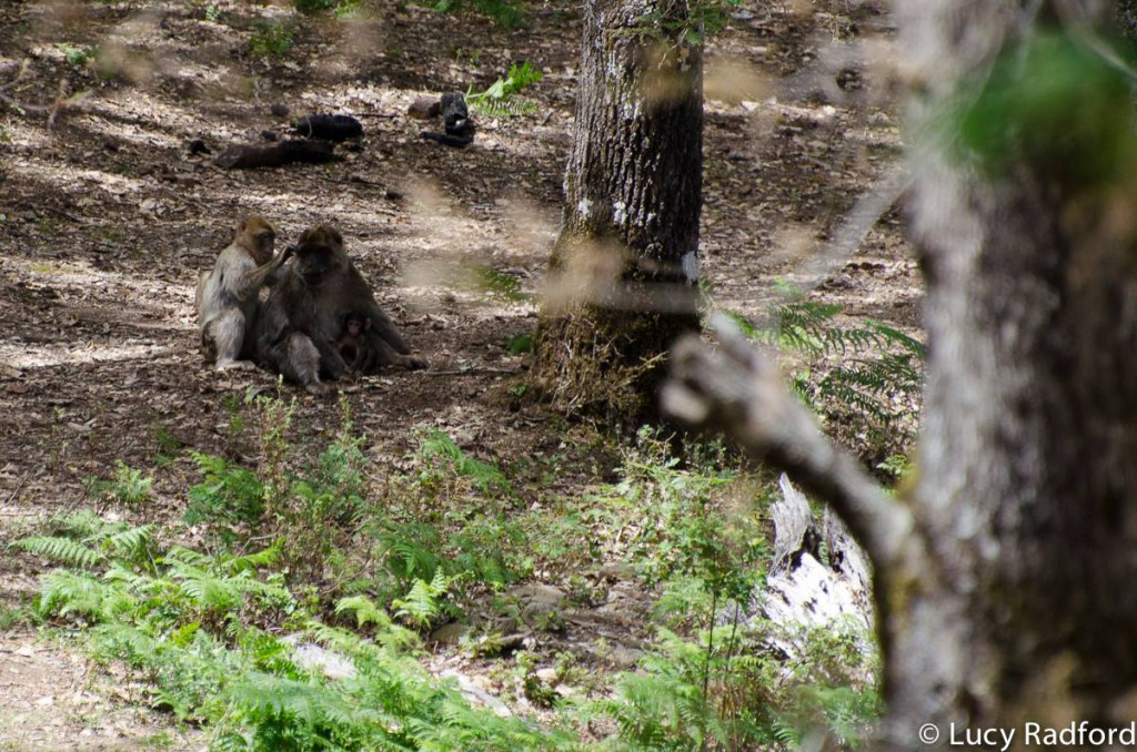 Monkeys in the shade