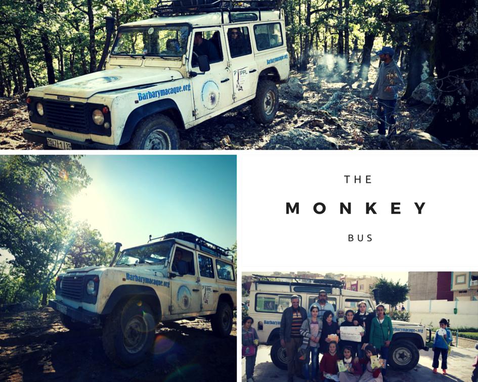 Le bus de singe dans la forêt et visitant une école.
