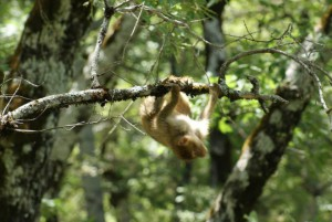 rescue-young-macaque3
