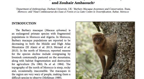 African Primates