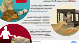illegal-trade-info-french